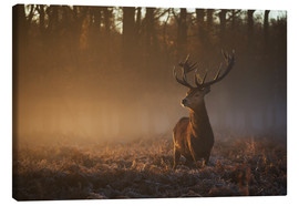 Lærredsbillede  Stag in autumn sunrise - Alex Saberi