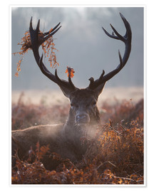 Premium-plakat Deer Stag in Winter
