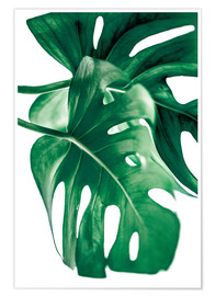 Premium-plakat Monstera 6