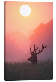 Lærredsbillede  A male deer Stag at sunset - Alex Saberi