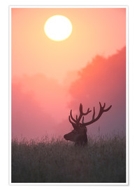 Premium-plakat A male deer Stag at sunset