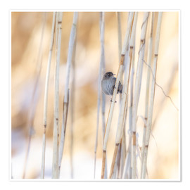 Premium-plakat little guest in the reed