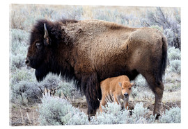 Akrylbillede  Bison cow with calf