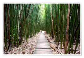Premium-plakat  Trail through the bamboo forest - Pacific Stock