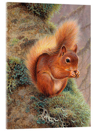 Akrylbillede  Squirrel with nut - Ikon Images
