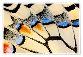 Premium-plakat Detail of a butterfly wing