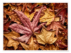 Premium-plakat Autumn leaves