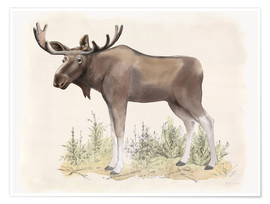 Premium-plakat Wildlife - moose