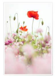 Premium-plakat Poppies in the field