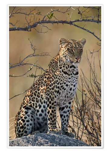 Premium-plakat Leopard perched on its rock