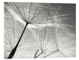 Akrylbillede  Dandelion Umbrella in black and white - Julia Delgado