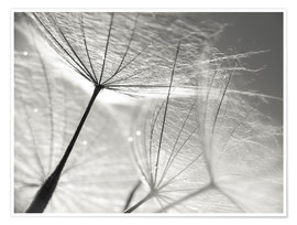 Premium-plakat  Dandelion Umbrella in black and white - Julia Delgado