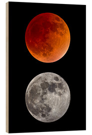 Print på træ  blood moon-super moon-full moon - MonarchC