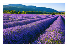 Premium-plakat Lavender dream of Provence