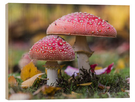 Print på træ  Toadstools in autumn leaves - Heiko Mundel